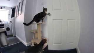 Как кот и собак выбираются из кухни