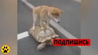видео приколы про животных 2018,