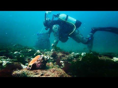 Οι μυδοφάγοι και οι νέες επιχειρηματικές ευκαιρίες από τις υδατοκαλλιέργειες στη Μαύρη Θάλασσα…