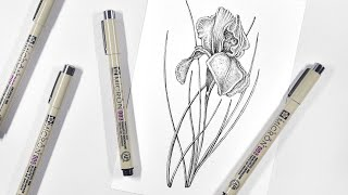 Iris Flower | Botanical Illustration | Pen & Ink Drawing Process