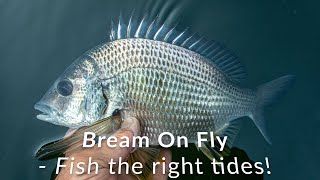 Sydney Bream on Fly - Fish the right tides!