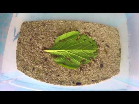 Pinag-aaralan sa mga worm at protosowa