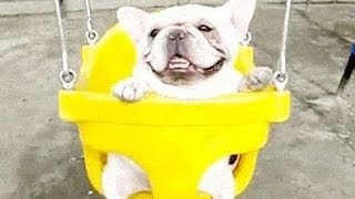 Dogs And Puppies On Swings Compilation 2014 [NEW]