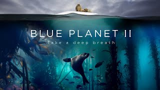 Take a deep breath. BBC Blue Planet II premieres soon, with images recorded by João