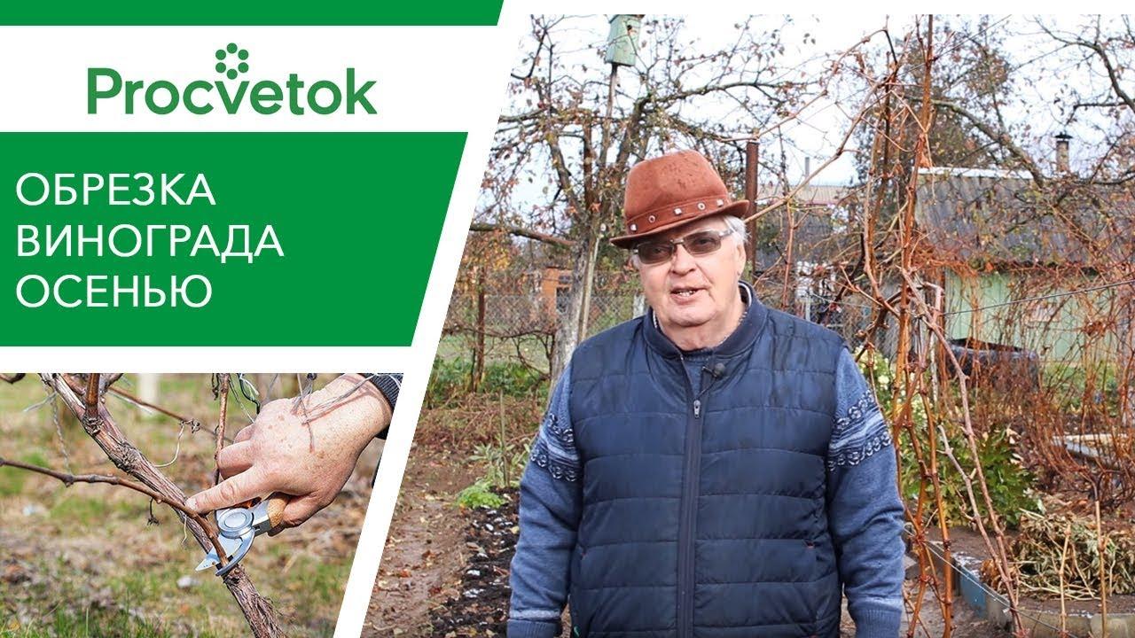 Обрезка винограда осенью для начинающих по годам