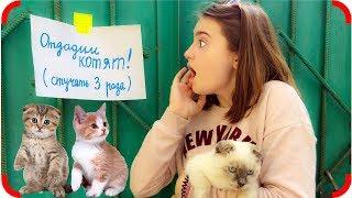 Уговорила Маму Завести Котенка!!! Видео для детей