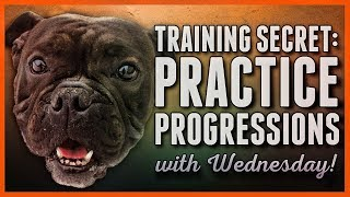 Dog training Secret - Progressions and Rehearsals are the KEY!