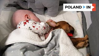 LITTLE PUPPY = LOTS OF JOY - DOGOTHERAPY – Poland In