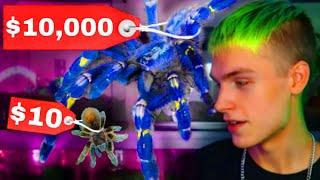 $10 Tarantula Vs. $10,000 Tarantula