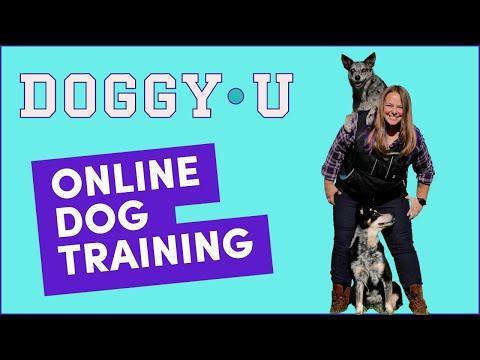 Online Dog Training - DoggyU - YouTube