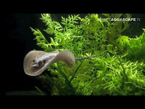 Aquascaping - Aquarium Ideas from ZooBotanica 2012, part 4