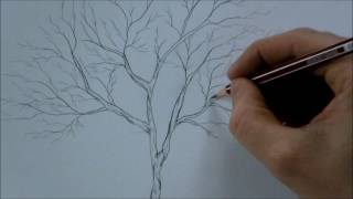 How to Draw a Tree Step by Step for Beginners In 8 Minutes