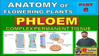 PHLOEM | Complex Permanent Tissue | Anatomy of Flowering Plants | Part 6 | NEET | AIIMS