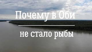 Водится ли в реке обь сом