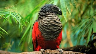 10 Beautiful Exotic Birds You Wont Believe Actually Exist