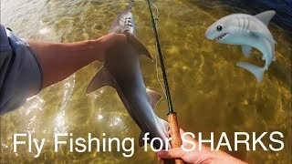 Fly Fishing for Sharks | Bonnetheads on fly in Tampa Bay