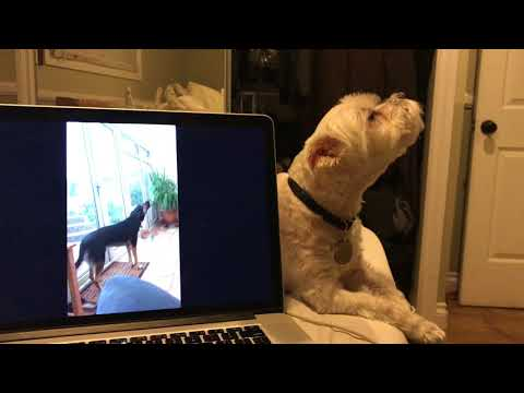 My Dog Getting Singing Lessons From A Dog On Reddit.
