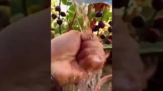 Tata cara pembibitan tanaman yang benar || Procedures for correct plant nurseries
