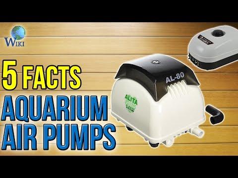 Aquarium Air Pumps: 5 Fast Facts