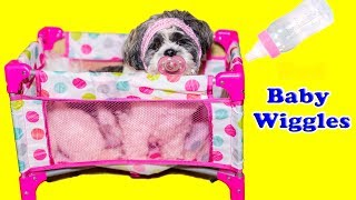 The Assistant has to watch Baby Doggy Wiggles a Pretend Play Funny Kids and Puppy Video