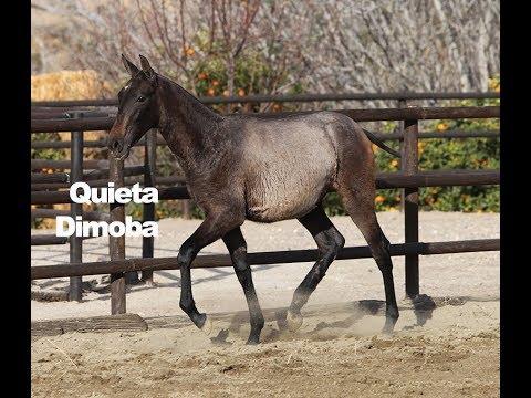 Quieta Dimoba (Publicado 1-3-2018)