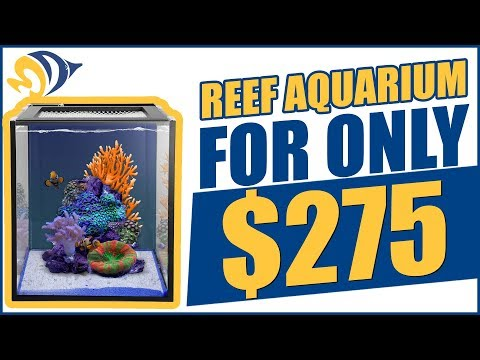 We Built a Reef Aquarium For Only $275. Here's How We Did It!