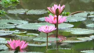 A Beautiful Chinese Meditation Music...'Free Flowing' MEDITATION Spirit !.