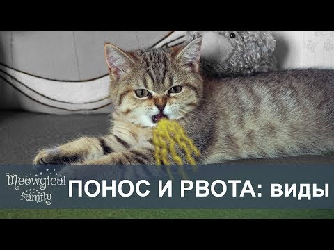 ПОНОС и РВОТА у кошек