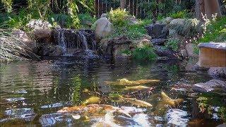 $50,000 DOLLAR Backyard KOI Pond!!!