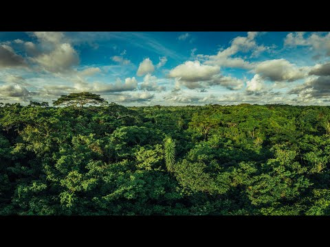 Verra Adopts Stronger Carbon Offset StandardsFor Forest Projects