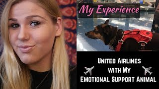 Tips For Flying With Emotional Support Animals On Airplanes | United Airlines | International