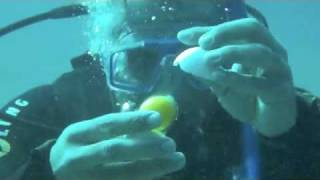 Breaking An Egg Underwater In The Red Sea, Egypt