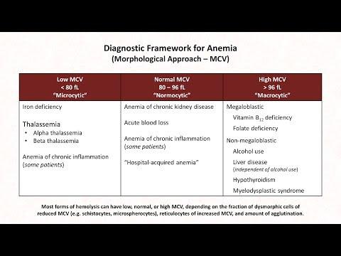 Niedokrwistość: lekcja 1 - schematy diagnostyczne