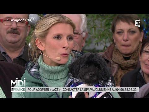 ANIMAUX : L'adoption de Jazz