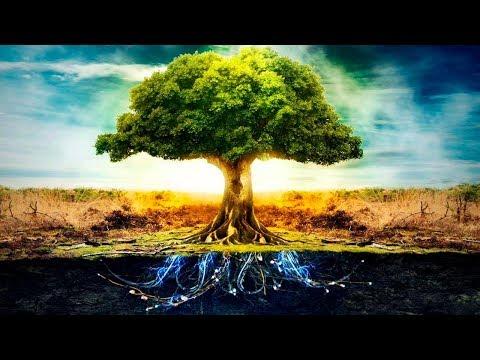 Descubren Algo Increíble sobre los Árboles que Siempre nos han Ocultado