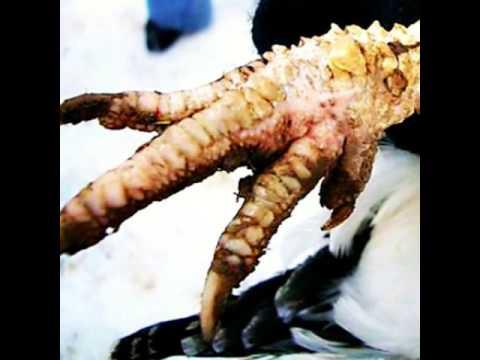 Frágil y sloyaschiesya las uñas de la causa y el tratamiento