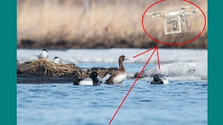 Охота с квадрокоптера. Охота c воздуха на уток. Hunting  quadcopter. Hunting from air for a duck.