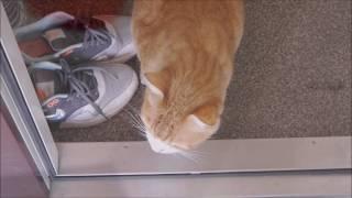 お散歩の練習 Walking Cat Monaka in a stroller   Kholo.pk
