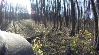 Смотреть онлайн Съемка осенней охоты на вальдшнепа