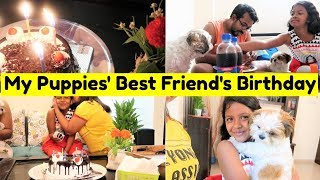 Puppies Celebrating Friend's Birthday | Surprise Birthday Celebration Vlog