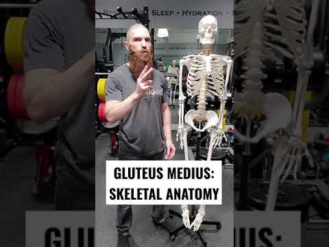 SKELETAL ANATOMY OF THE GLUTEUS MEDIUS MUSCLE!!! #Shorts