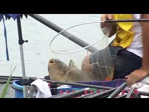 Gioco che pesca con sviluppo