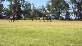 preview picture of video 'Polo at the North Shore (Mokuleia)'