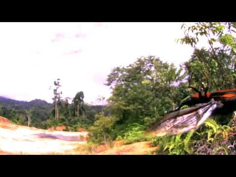 タイショウオサゾウムシの飛翔