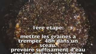 Preparation De Graine Pour Pêcher La Carpe!!!