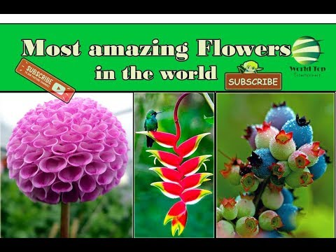 Unique Flower,Best Flowers,Most Amazing Flowers In The World