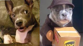 Spécial Tik-Tok#Meilleures Vidéos Drôles de Chat et de Chien 🐶🐱- Best Funny DOGS et CATS #113