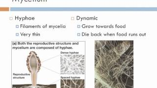 Biology 2, Lecture 9: Fungi
