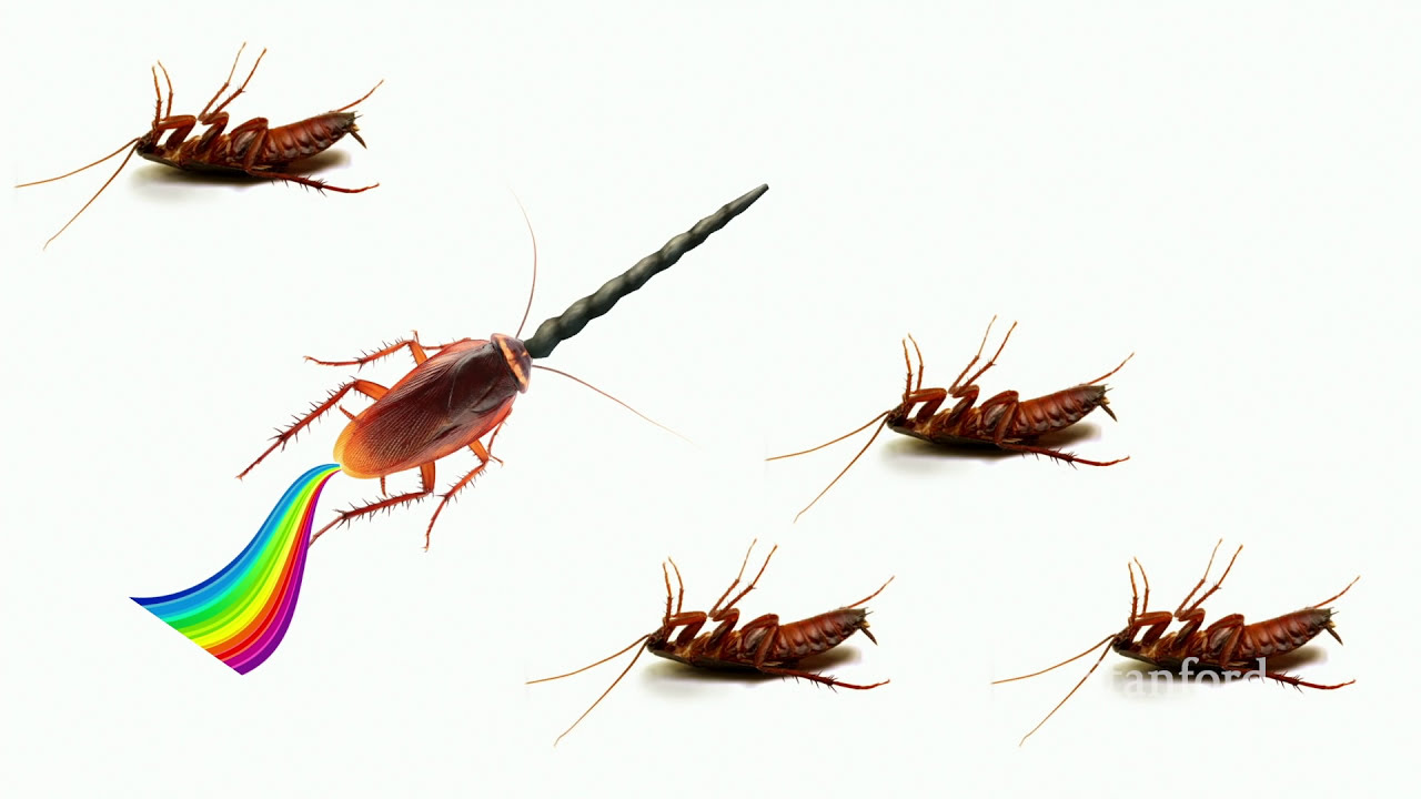 How to Find Product Market Fit - Peter Reinhardt
