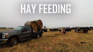 IT IS HAY FEEDING SEASON!